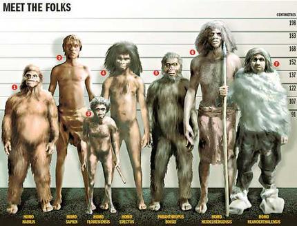 homo sapiens , homo neandertalis, homo erectus